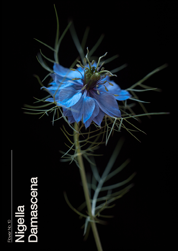 16 Flowers10