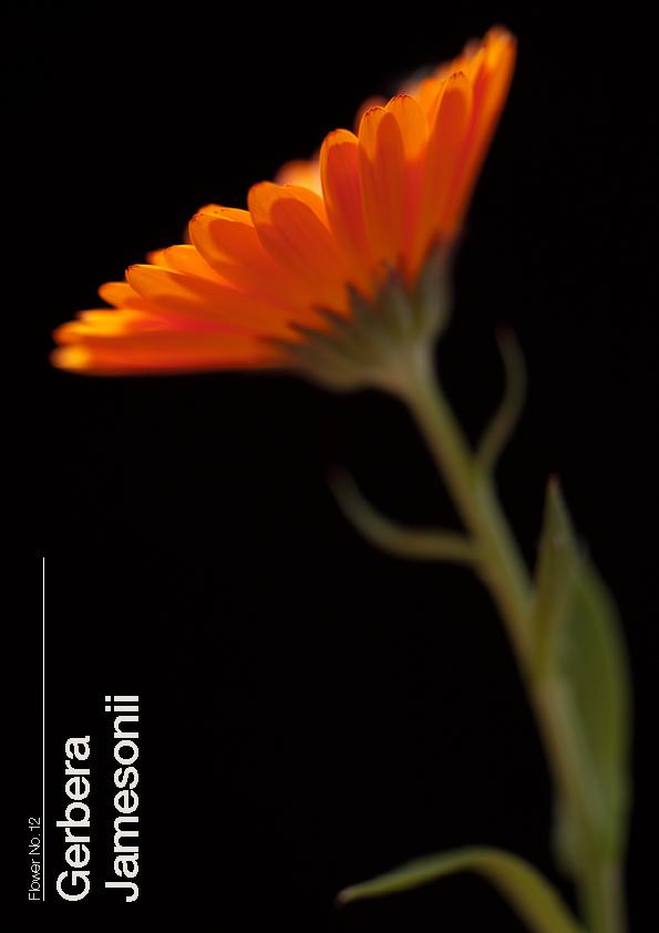 16 Flowers12