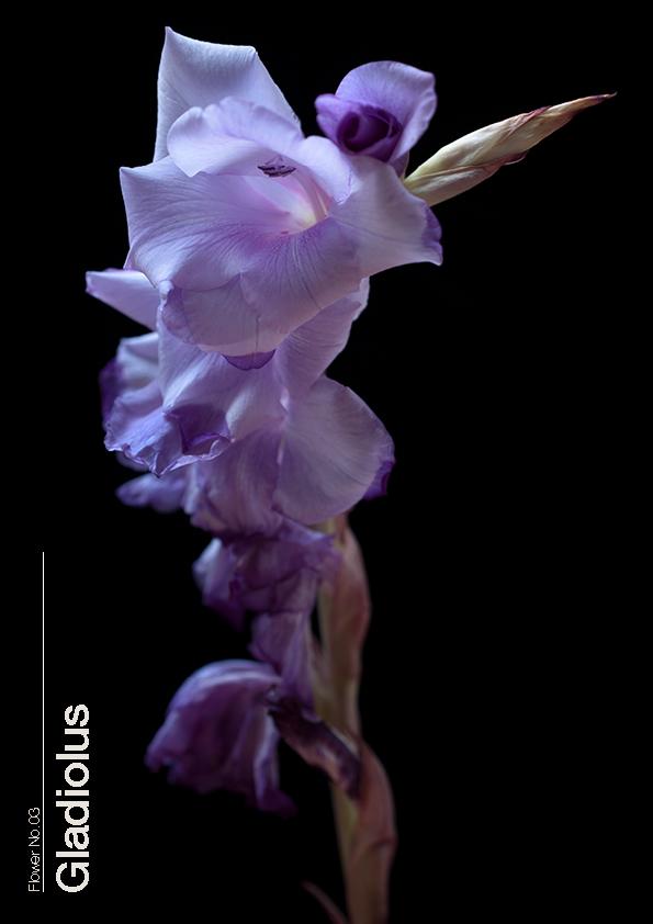 16 Flowers3