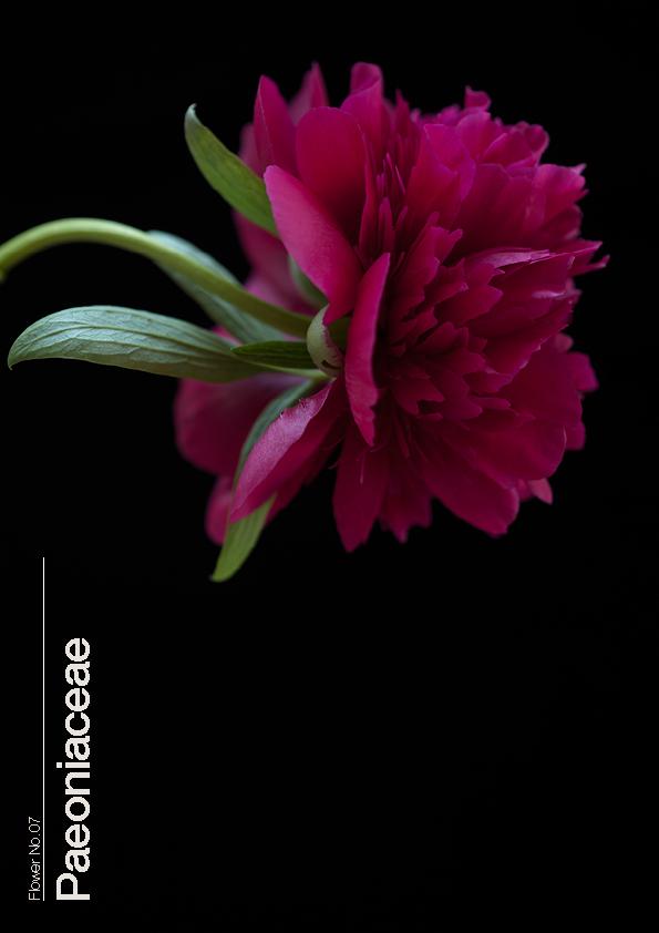 16 Flowers7