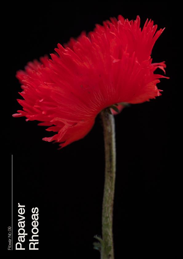 16 Flowers9