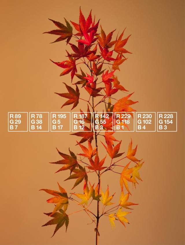 Iain Crockart Autumn's Colour Code