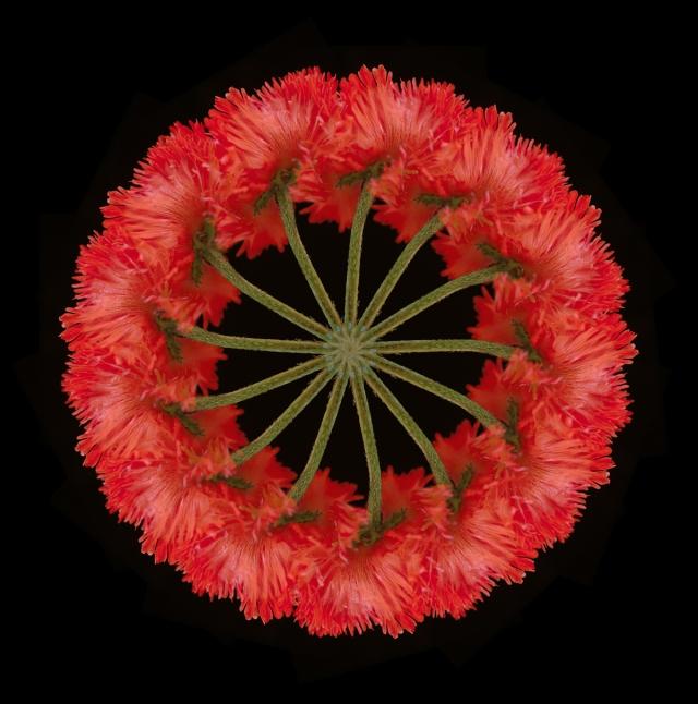 Iain Crockart poppy-wreath