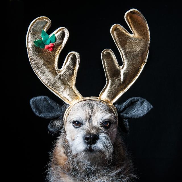 Iain Crockart Christmas with Ned 2014